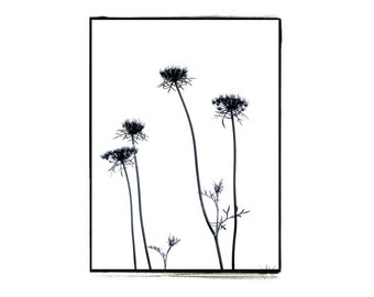 Vintage Style Black and White Botanical Photograph Queen Anne's Lace Gray Minimalist