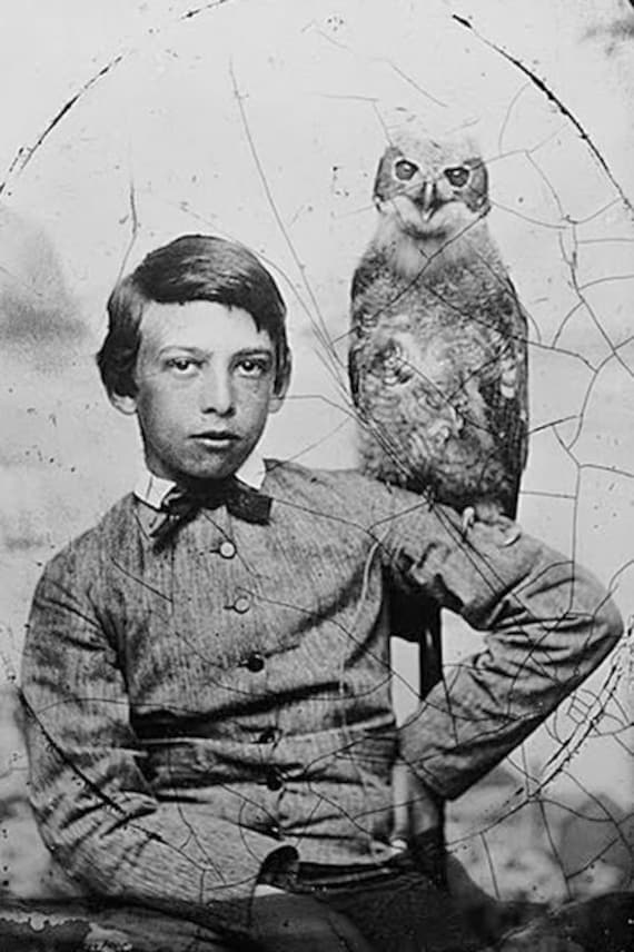 Boy with owl victorian vintage photography weird spooky for Odd victorian names