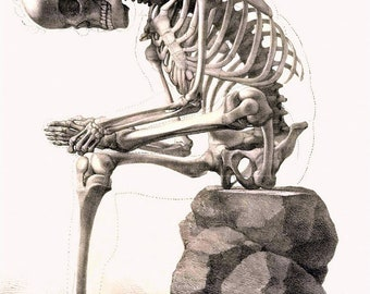 "Skeleton Sitting, The Thinker, antique goth art, skeleton, 1867 Bones, anatomy poster, , Skull. 8x10"" premium poster  Print, goth"