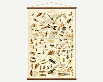Vintage pull down chart of Insects. High Quality Handmade vintage art