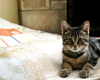 Cute Cat Photo - Kitten on Map 5x7 Joy Break Photograph - Tiny Tabby Kitty - Silly - Funny - Kitten With A Plan Photo - Smile