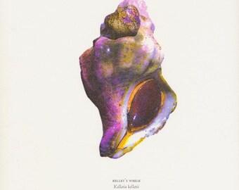 Letterpress print, Kellet's Whelk, Kelletia kelletii