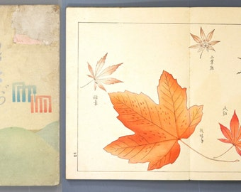 "1911, Japanese antique woodblock print book, Kubota Kinsen, ""Momiji(Tinted autumnal leaves)"""