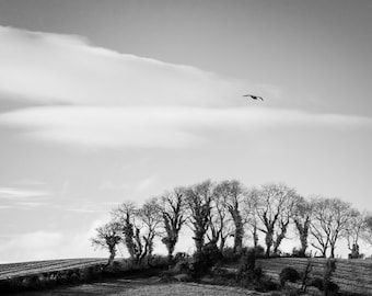 Ireland Print - Irish Landscape Black and White Photograph - Bird above the Trees - Northern Ireland