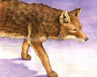 Watercolor Painting, Watercolor Original, Wall Art, Home Decor, Wildlife Nature, Boys Room Girls Room, Coyote, Winter Purple, FREE SHIPPING