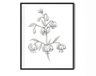 Martagon Lily Print, Flower Art, Botanical Illustration, Wall Art, Pen Ink Print, Floral Art, Botanical Print, Black and White, Flower Print