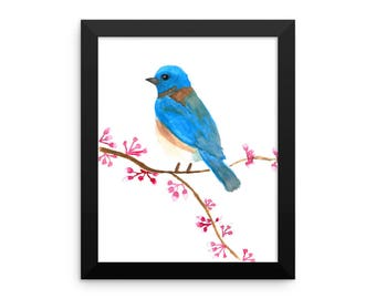 Western Bluebird and Spring Blossoms Framed poster