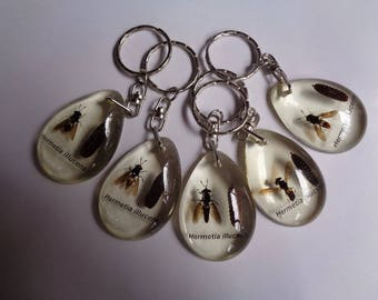 Real 5 pcs Flies keychain encased in clear resin