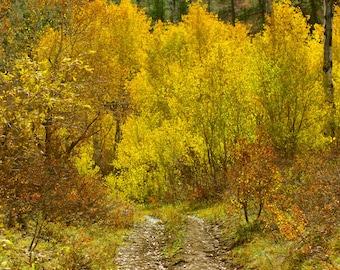 Colorado Nature Photography, Aspen Trees, Autumn Trees Landscape Print, Yellow Photography, Durango Colorado, Fall Tree Art, Forest Decor