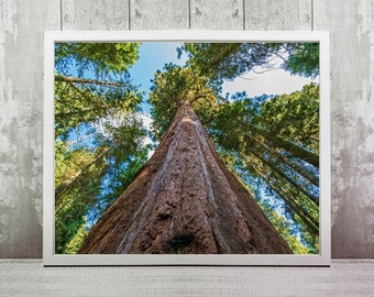 Sequoia Print, Instant Download, National Park Travel Photography, Home Decor, Wanderlust, California, National Park Art, Wall Print