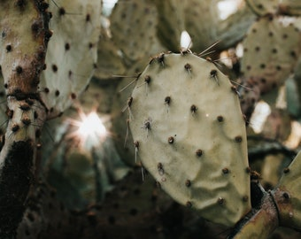 Prickly Pear Photo Print