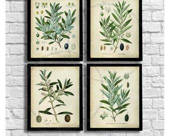 Farmhouse Decor Vintage Botanical Prints set of 4 unframed Olive plants prints - Gift for her, Gift for cook, kitchen decor, Chef gifts