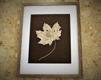 Framed Leaf Skeleton Art Work  - Real Maple Leaf Skeleton - Matted Art