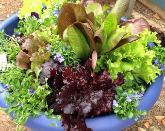 Lettuce Seed Mix, Heirloom Lettuce,Salad Bowl Mix, Great for Container Gardens and Small Space Gardens