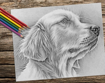 Adult Coloring Page, Instant download coloring, coloring book for adult, Printable coloring page, Golden Retriever, dog, coloring page