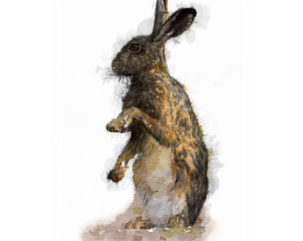 European brown hare   Limited edition fine art print from original drawing. Free shipping.