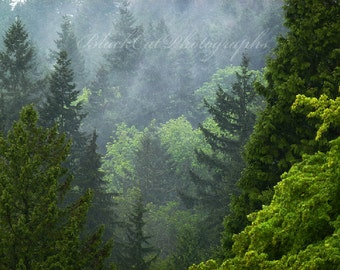 Forest Photograph, Pacific Northwest, woods, mist, fog, Canadian wilderness scenery, 8x10 forest green, emerald green, fine art photography
