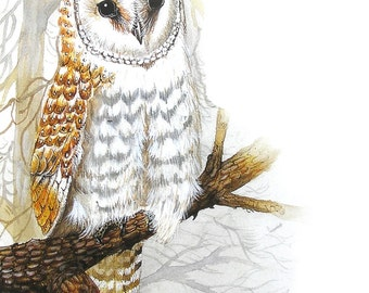 Greeting Card - Barn Owl - Australian Bird