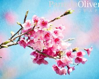 Okinawa Japan, Okinawa, cherry blossoms, cherry blossom Japan, sakura okinawa, blossoming tree, okinawa photography, 4x6, 5x7, wall art