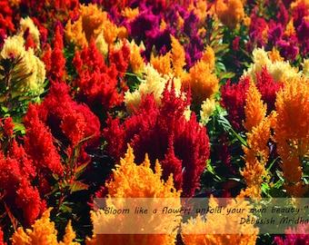 Inspiration Card - Celosia Plumosa