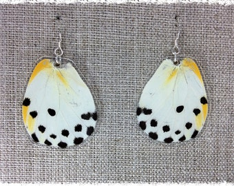 Real Butterfly Wing Earrings; Butterfly Jewelry; Sterling Silver Butterfly Earrings; Yellow and Black Butterfly; Insect Jewelry; HIND wing