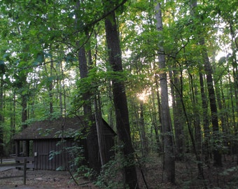 Rustic building in the woods