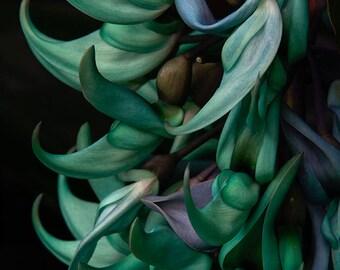 Exotic Jade Vine - Turquoise Tropical Flower Photo