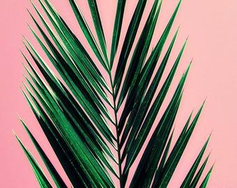 palm tree art print // photography // mid century california pastel art print - Pink Palm, original photograph art print