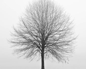 black and white photography, tree photography, winter photography, landscape photography, lone tree, minimalist photography, trees in fog