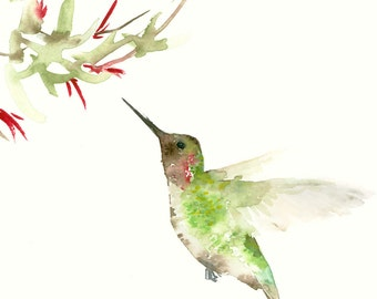 Humming Bird Art Print from Original Bird Watercolor