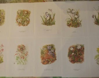 10 vintage botanical posters Orchis, friends, Squill 2 leaves, Lady of eleven, Muscari cluster, hepatic, Silene Renfle, cuckoo flower