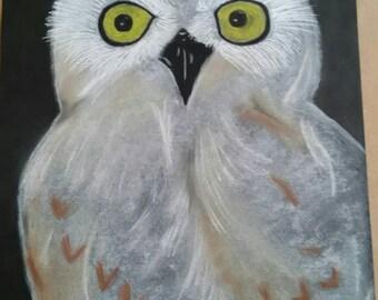 Snowy Owl Soft Pastel Drawing