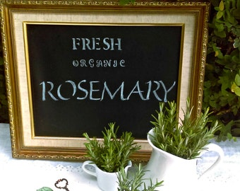 Wedding Decor: Organic Herbs 100 Rosemary Sprigs