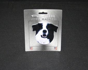 Magnet Border Collie
