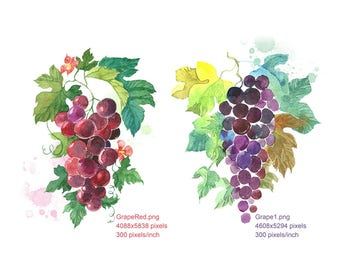 Clipart Watercolour Grapes, Grapes Red, Grapes Black, Digital Download, Wall Decor, Home Decor, Botanical Wall Print
