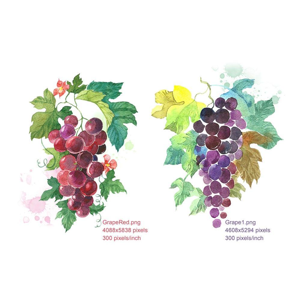 Clipart Watercolour Grapes Grapes Red Grapes Black Digital