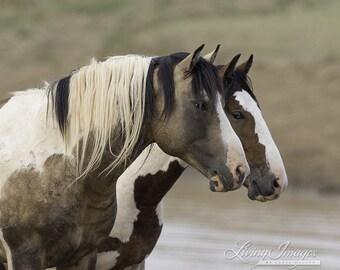 Painted Friends II -  Fine Art Wild Horse Photograph - Wild Horse - Tonkawa - Fine Art Print
