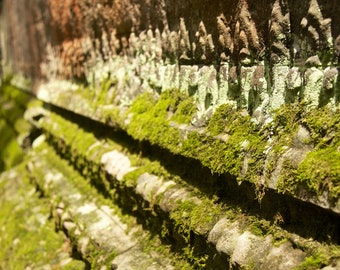 """Travel Photography """"Mossy Temple"""" Print"""