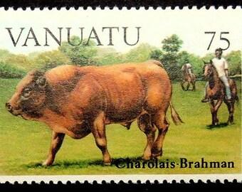 Charolais-Brahman Cow -Handmade Framed Postage Stamp Art 16966