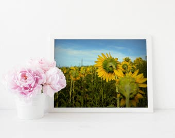 Sunflower Field Fine Art Photo Print