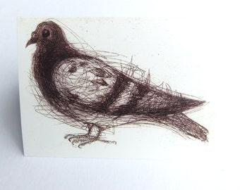 Pigeon Card, Greeting Card, Bird Art Card, Common Pigeon