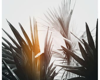Palm Tree Print - Black and White Photograph - Tropical Art - Travel Photograph - Flare #1 - Tropical Print -California -Florida - Oversize