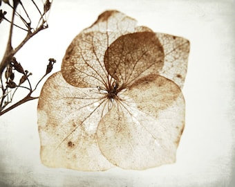 "Rustic wall art hydrangea flower botanical print brown neutral minimal foliage plant art ""Hydrangea Two"""