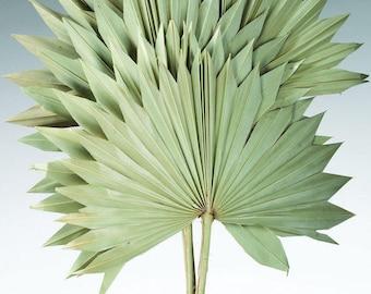 Dried Sun Palm Leaf Fans | Natural Leaf Fans | Dried Plants | Dried Decor