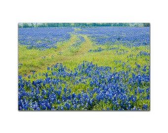 Road through a Field of Texas Bluebonnet Flowers in a Field Bluebonnet Photo Decor, Wall Art Red and Blue Fine art Photo floral nature print