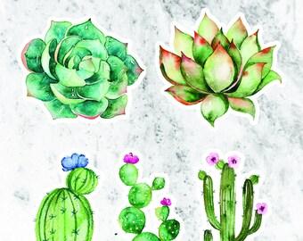Succulent stickers // crazy cactus lady // cactus stickers // planner stickers // die-cut stickers // sticker art // scrapbooking // desert