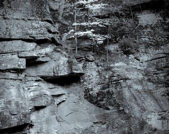 fortitude, 8x10 fine art black & white photograph, nature