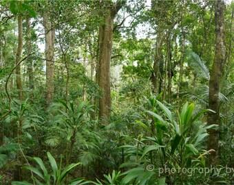 Rainforest Panorama - 32x10inch (81x25cm) nature photography print, landscape fine art forest green woodland Australia home decor wilderness