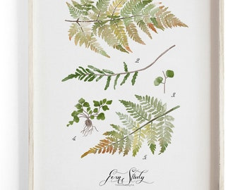 Fern Study Vol.2 - Scientific illustration. Beautifully textured cotton canvas art print.  Large scale art