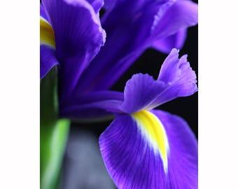 Purple iris photo Iris photo Purple iris Iris wall decor Iris wall art Spring flower photo Iris decor photo Purple flower photo